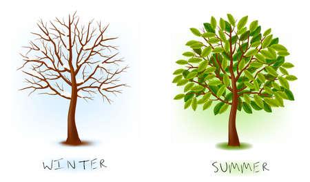 cartoon trees: Two seasons - winter, summer. Art tree beautiful for your design. illustration.