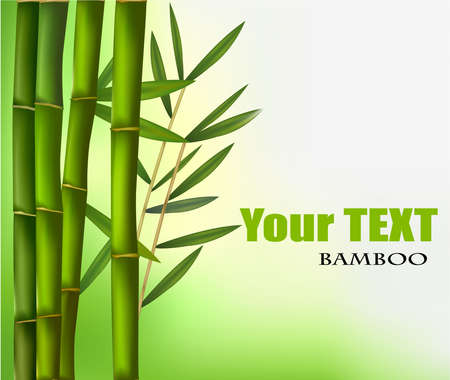 lucky plant: Bamboo background with copy space. Vector illustration.
