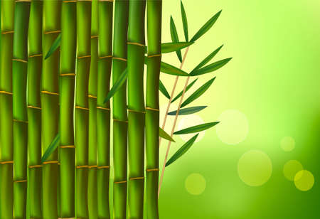 Beautiful bamboo border. Vector illustration.  Vector