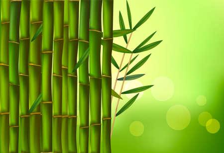 boughs: Beautiful bamboo border. Vector illustration.