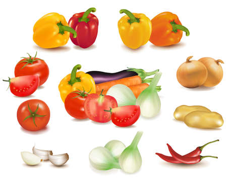 The colorful group of vegetables  Vector