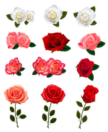 Group of a beauty roses. illustration.  Vector