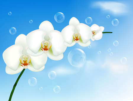 Beautiful orchid with bubbles on the blue sky.  Vector