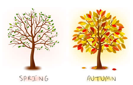pink bushes: Two seasons - spring, autumn. Art tree beautiful for your design.  illustration.  Illustration