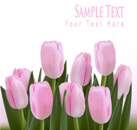 tulips isolated on white background: Flower design border isolated on white.