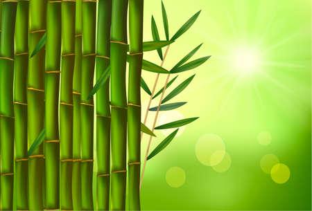 Beautiful bamboo border. illustration. Stock Vector - 9053474