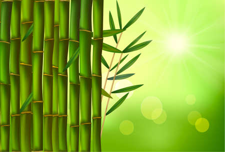 bough: Beautiful bamboo border. illustration.