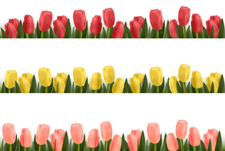 tulips isolated on white background: Tree flower design borders isolated on white. Vector.