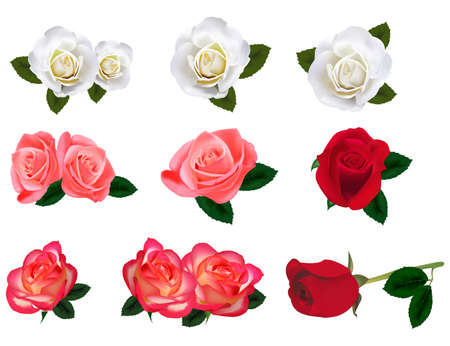 Set di una bella Rose su uno sfondo bianco. Vettore.