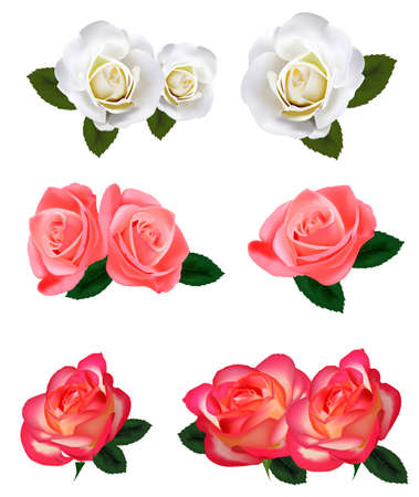 Nine beautiful roses on a white background. Vector.  Vector