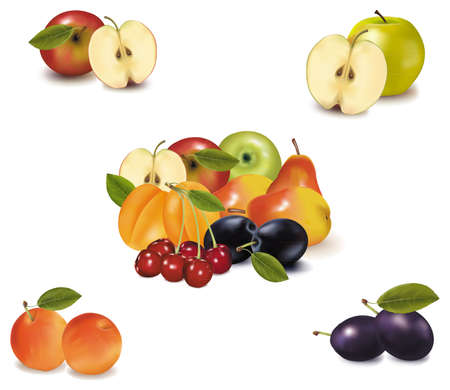 Photo-realistic vector illustration. Big group of different fruit.  Vector