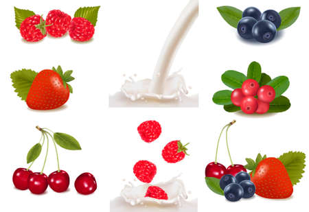 Group of cranberries, blueberries, raspberries and fruits falling into the milk splash.  Vector