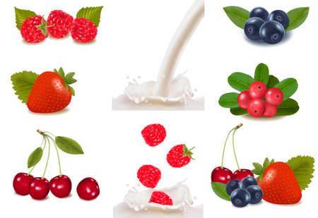 blackberry fruit: Group of cranberries, blueberries, raspberries and fruits falling into the milk splash.