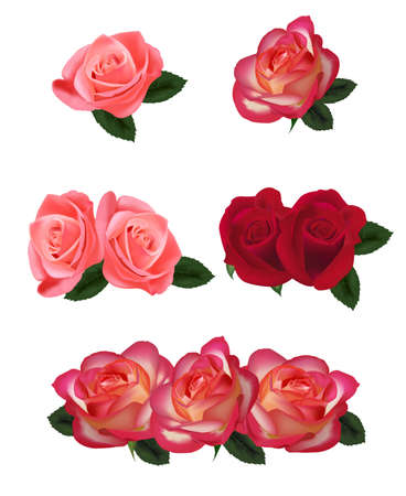 hearts and roses: Big set of a beautiful roses. Vector.  Illustration