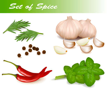 Set with spices.  Vector
