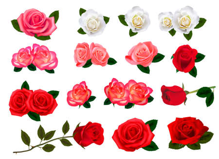 Set of a beautiful roses on a white background. Vector.  Vector