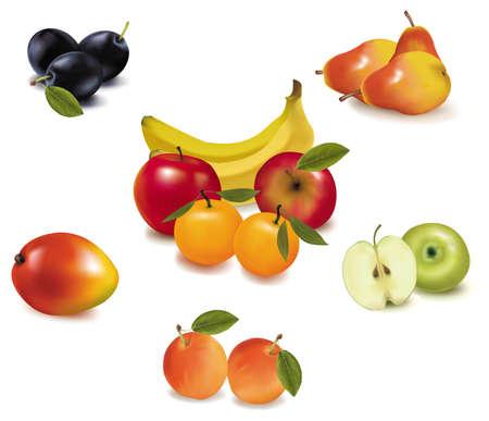 Group of fruit. Vector.  Vector