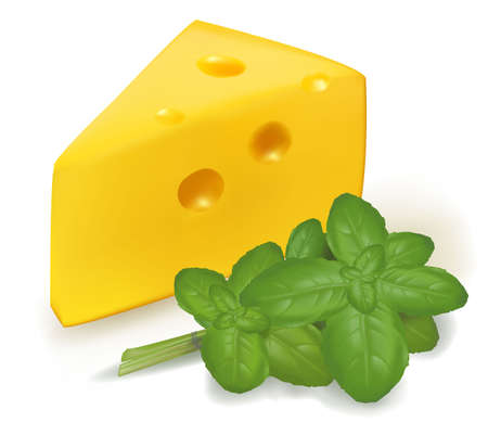 cheddar cheese: Photo-realistic vector illustration. Cheese with basil.  Illustration