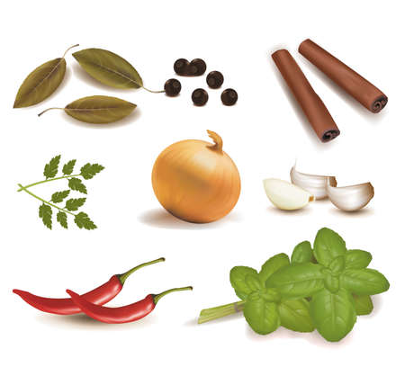 bay: Group of spice. Vector.