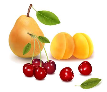Group of fruit. Vector.  Stock Vector - 9538563