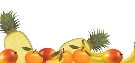Exotic fruit design border isolated on white. Vector.  Vector