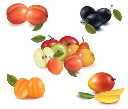 Group of fruit. Vector Vector