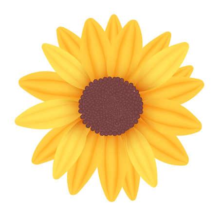 details: Sunflower. Vector.  Illustration