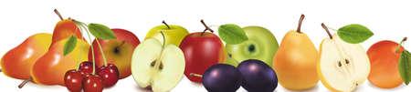 fruit design border isolated on white. Vector.  Vector