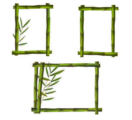 tropical border: Green bamboo frames. Vector.