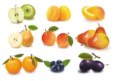 rinds: Photo-realistic vector illustration. Big group of ripe fruit Illustration