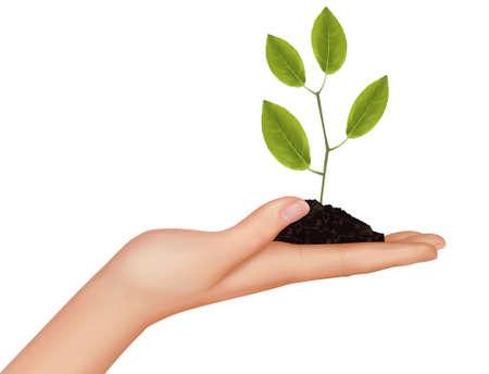 soils: Persona in possesso di una giovane pianta. Illustrazione vettoriale.