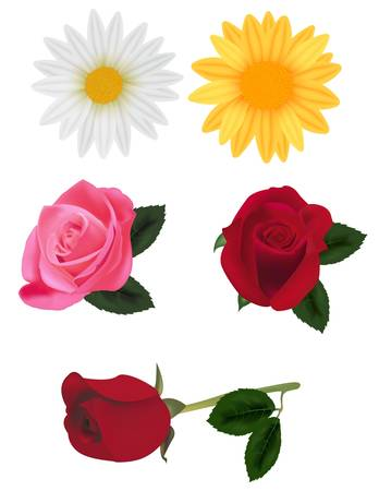 beautiful group of flowers isolated on the white. photo-realistic illustration. Vector