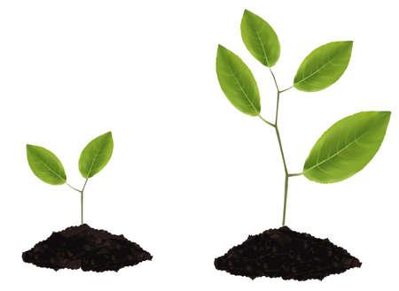 fide: foto-gerçekçi illüstrasyon. İki bitkiler. Çizim