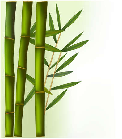 bamboo border: Bamboo on the green and white background. Illustration