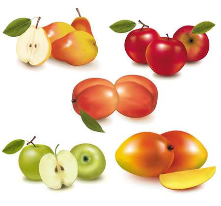 mango: Group of fruit. Vector.