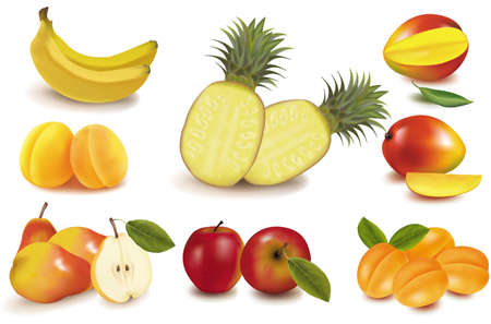 mango fruit: Photo-realistic vector illustration. Big group of exotic fruit