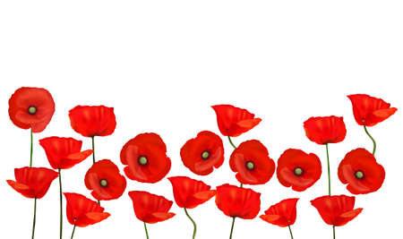 Background with beautiful red poppies.  Vector