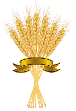 Ears of wheat and ribbons.  Vector