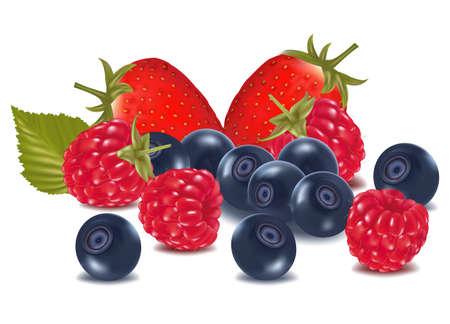 blueberries: Raspberries, blueberries and strawberry .  Illustration