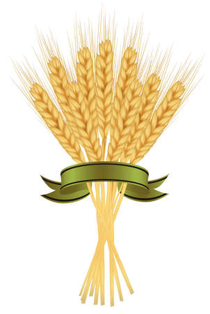 Ears of wheat and ribbons on white  Stock Vector - 9665042