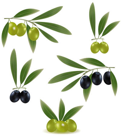picking fruit: Green and black olives with leaves.