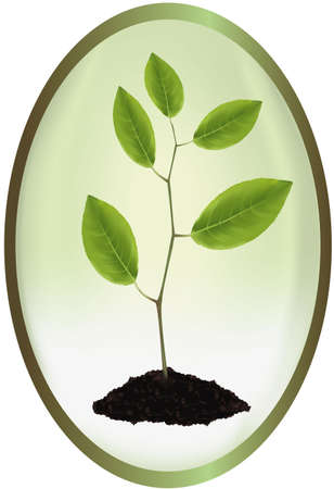 Label with young plant. Stock Vector - 9665099