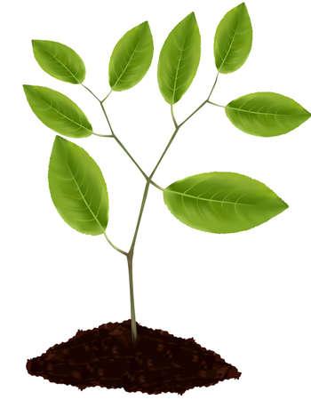 Green plant. Stock Vector - 9665168