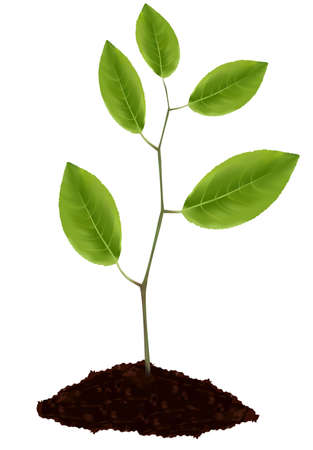 Young plant isolated on white background.  Stock Vector - 9665171