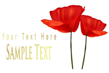 Greeting card with two red poppies.  Vector