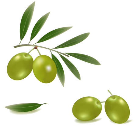 picking fruit: Green olives with leaves.