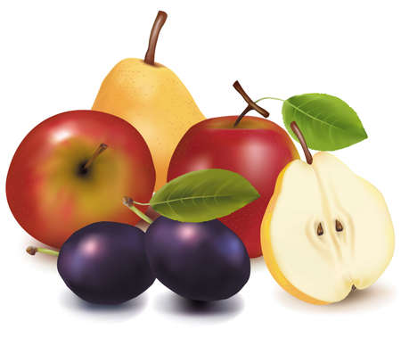 Two apples, two plums and two pears  Vector
