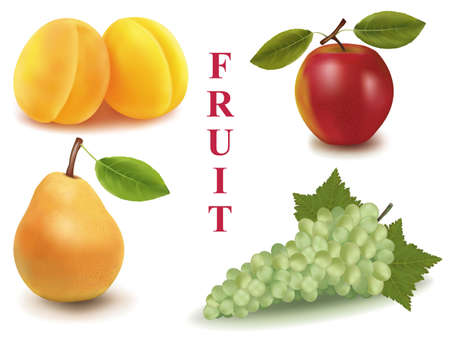 Colorful group of fruit.  Vector