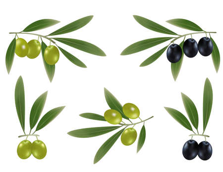 Green ad black olives with leaves. Stock Vector - 9723214