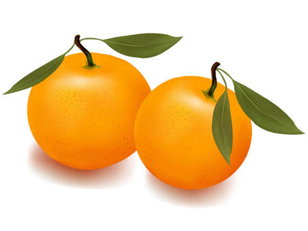 rinds: Two ripe tangerine fruits with green leaves.  Illustration